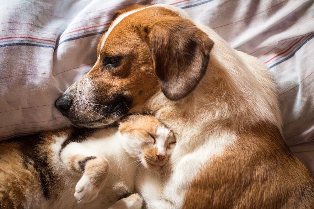chien et chat détendus dorment ensemble